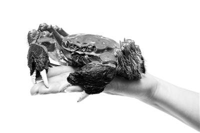 """8只螃蟹7只短斤少两 """"固城湖畔""""包装名堂多"""