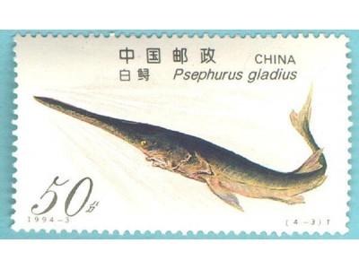 长江所专家:长江白鲟可能已经灭绝,近15年未见