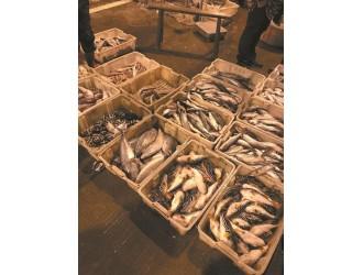19箱共639斤!台州椒江查获大量剧毒河豚鱼