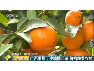 这种家中常备的水果,价格暴跌!从10元一斤到1块6,从惜售到急售…