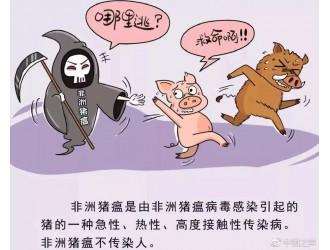 """""""猪瘟""""何以入侵速冻饺子? 专家:有四种可能"""