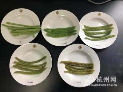 春季吃四季豆小心中毒?四季豆:这锅我不背,有图有真相!