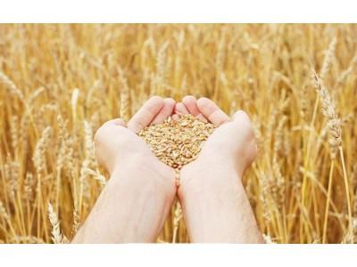 粮食安全的生命线在于耕地健康