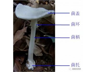 贵州兴义多人食用野生菌中毒