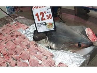 """法国超市公然卖鲨鱼肉 称并非""""蓄意捕捞""""而是""""意外收获"""""""