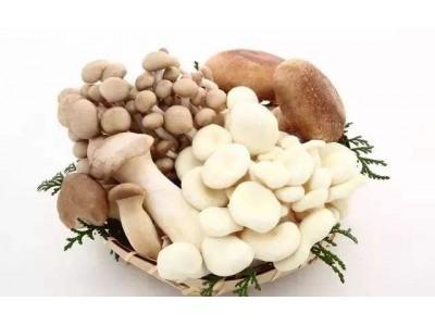 老人经常吃蘑菇不易患认知障碍