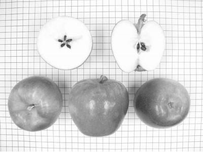 """""""鲁丽""""创苹果新品种权转让费最高纪录"""
