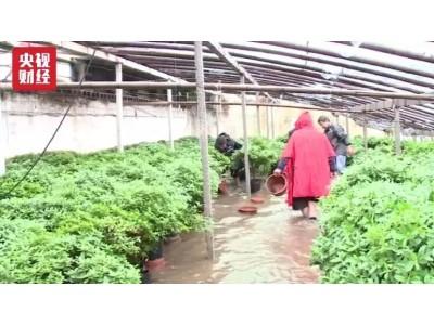 """""""利奇马""""席卷""""蔬菜之乡"""",1.8万个大棚被淹!北京有蔬菜已涨价30%"""