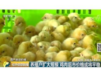 """记者深入产地调查:鸡肉价格怎么走?还能愉快地""""吃鸡""""否?"""