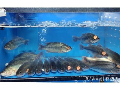 """武汉超市内淡水鱼有了""""身份证"""""""