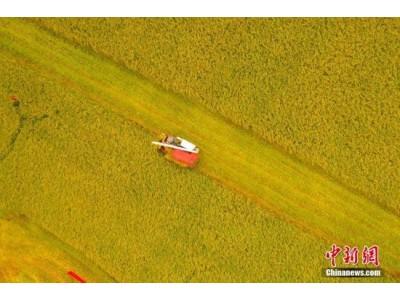 官方发布白皮书就中国粮食安全提出四项政策主张