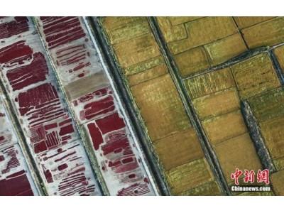 中国官方发表《中国的粮食安全》白皮书