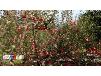 这个主产地,苹果3毛钱1斤了!价格过山车,究竟怎么了?