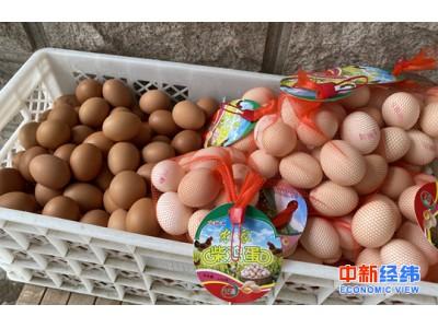 继猪肉价格回落鸡蛋也降价了 月内降幅近20%
