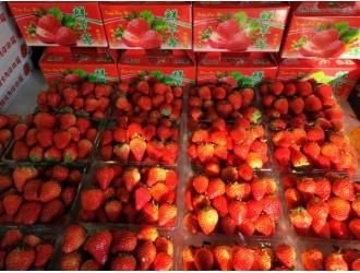 这个冬季哪种水果最网红?冬草莓!销量首超车厘子成老大!价跌近年同期谷底