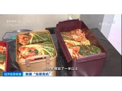 1棵白菜,79元!韩国人放弃腌泡菜了?进口泡菜九成来自中国