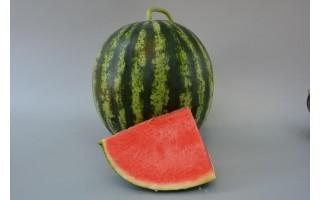 研究揭示西瓜果实风味形成机制
