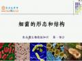 细菌的形态和结构 (432播放)