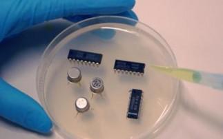 """酵母细胞""""生物电路""""研制成功"""