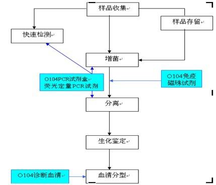 定量pcr步骤