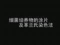 革兰氏染色 (921播放)