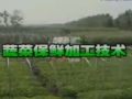 蔬菜保鲜加工技术 (97播放)