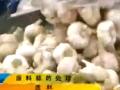 大蒜干制品加工技术 (129播放)