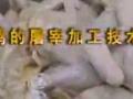 鸡屠宰加工技术 (239播放)