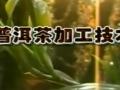 普洱茶加工技术 (47播放)