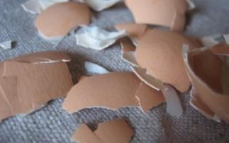 有关鸡蛋的12个基本常识