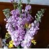 长沙睿鼎-紫罗兰提取物
