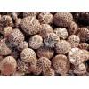 花菇 广东特产 白蘑科 野生菌 氨基酸