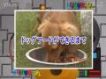 科学技术48狗粮制作