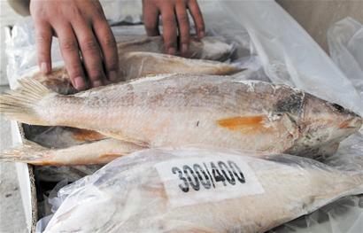 鳇鱼 野生保护动物