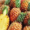 供应菠萝粉