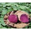 紫甘薯全粉  绿色纯天然