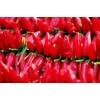 辣椒油树脂价格 辣椒精价格 增味剂 着色剂 辣椒精的用法