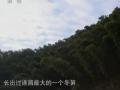 舌尖上的中国1自然的馈赠 (124播放)