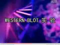 Western blot视频:蛋白浓度测定 (235播放)