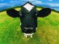 """新西兰牛奶检出""""双氰胺"""""""