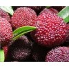 话梅香精生产厂家  话梅糖香精、 西梅香精、 树莓香精供应商