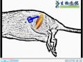 微生物教学---外周神经移植和基质调节修复损伤大鼠脊髓 (8播放)