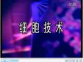 胎鼠表皮干细胞原代培养 (9播放)