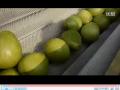 果蔬清洗机-兆辉机械 (37播放)