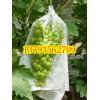 半透明薄膜型葡萄袋制袋机 葡萄纸加膜果袋机
