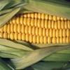 玉米淀粉厂家直销,玉米淀粉粘度,玉米淀粉品牌