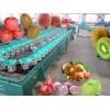 青枣重量分选选果机 哪里有卖青枣选果机