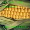 玉米淀粉,蜡质玉米淀粉,玉米淀粉生产厂家
