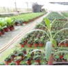 植物高效快繁技术服务