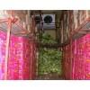 果蔬保鲜库|香蕉苹果保鲜库|豪德冷库安装|血站冷库